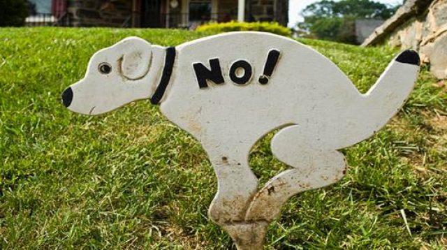 cara bilang tidak dalam bahasa Inggris