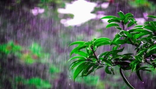 arti rain