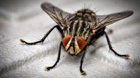 arti fly